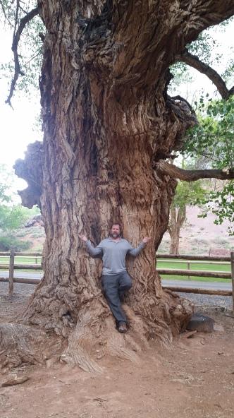 Sean Tree