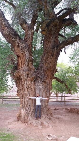 Vickie tree