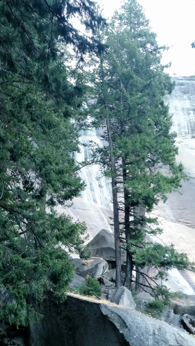 trees-with-vernal-fall-in-background