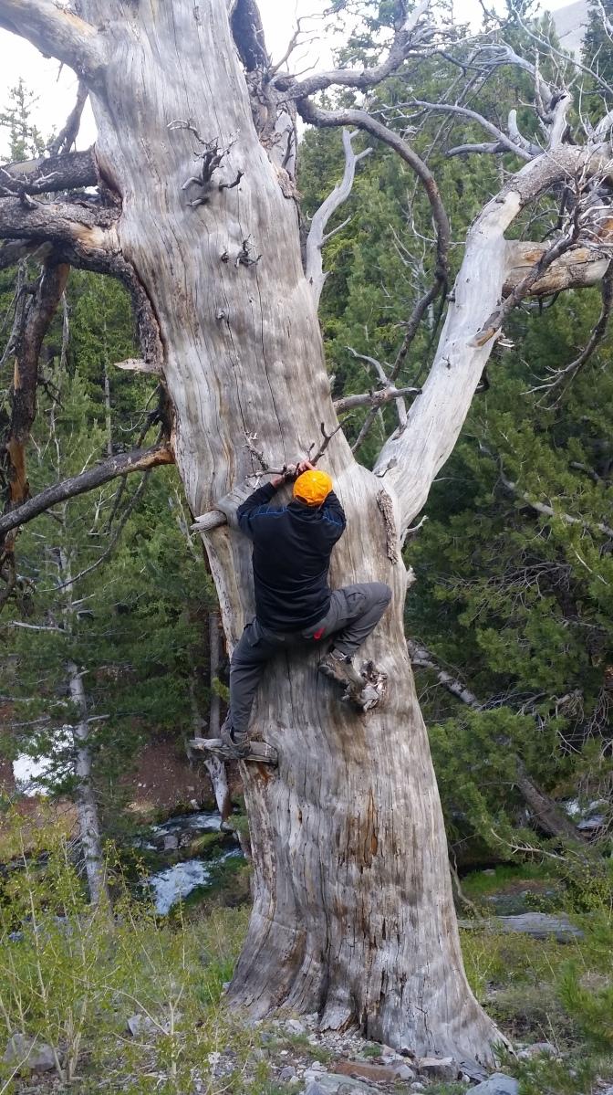 sean-climbing-a-tree